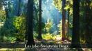 zdjęcia lasu jako Świątyni Boga